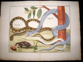 Albertus Seba C1750 LG Folio Hand Coloured Print. Snakes, Botanical 84